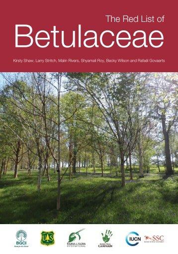 Betulace7-FINAL