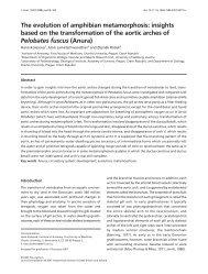 The evolution of amphibian metamorphosis: insights based on the ...