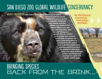 Wildlife Conservancy Projects (PDF) - San Diego Zoo