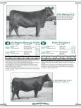 Heifer Pregnancy - Angus Journal - Page 7