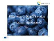 Bild 1 - Västerbotten Investment Agency