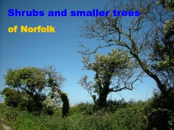 Adobe PDF - Norfolk and Norwich Naturalists' Society