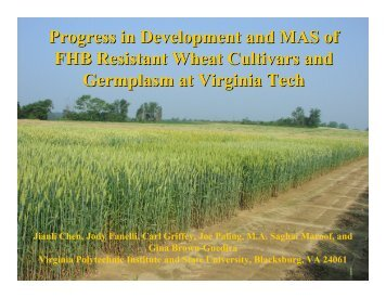 Progress in Development and MAS of FHB Resistant Wheat Cultivars ...