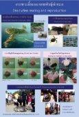 เต่าทะเล - Page 3