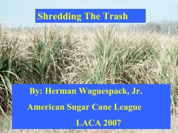 Shredding The Trash