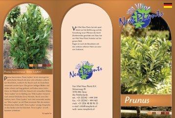 Prunus laurocerasus - van Vliet New Plants