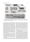 APOPTOSIS DE LINFOCITOS ASOCIADA A ENFERMEDADES ... - Page 3