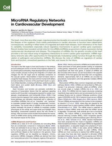 MicroRNA Regulatory Networks in ... - UT Southwestern