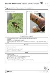 Protection phytosanitaire - Auxiliaires prédateurs araignées - Agridea