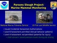 Parsons Slough Project: Marine Mammal Monitoring