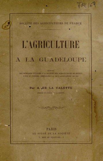 L'AGRICULTURE - Manioc