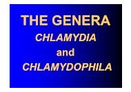 CHLAMYDIA and CHLAMYDOPHILA - LF