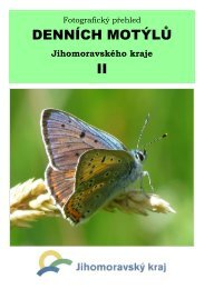 Denní motýli Jihomoravského kraje - 2