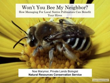 Native Bees - Colorado State Beekeepers Association