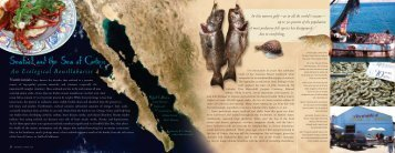 Seafood and the Sea of Cortez - Arizona-Sonora Desert Museum