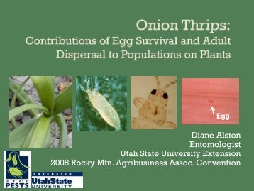 Onion Thrips - Utah Pests - Utah State University