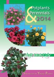 Armad A A 2014 - Young Flowers A/S