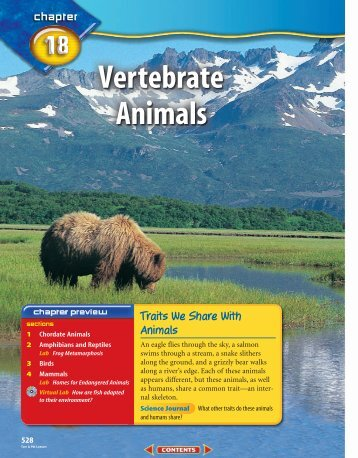 Chapter 18: Vertebrate Animals