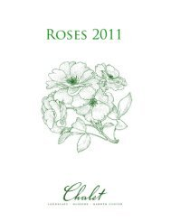 CLASSIFICATION OF ROSES - Chalet Nursery