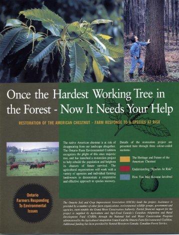 American Chestnut - Ontario Soil and Crop Improvement Association