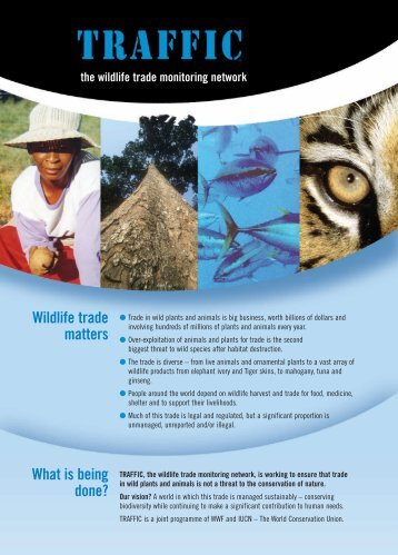 Wildlife trade matters What is being done? - WWF Malaysia