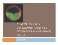 chapter 10, early development and axis formation in amphibians part-2