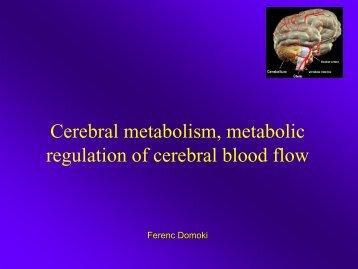 Az endothelium szerepe a cardiovascularis rendszerben