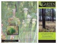 Longleaf Pine Ecosystem
