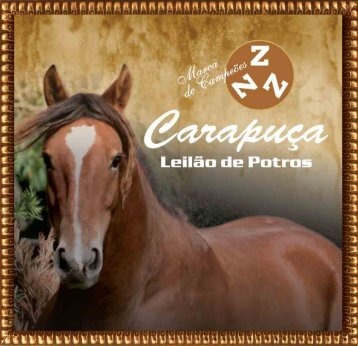 LOTE 01 - Canal Rural