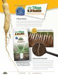 tillage-radish-resource-guide - Page 4