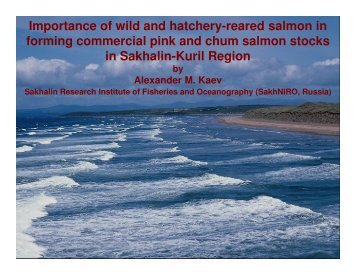 Importance of wild and hatchery-reared salmon in forming ...