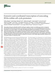 Extensive and coordinated transcription of noncoding RNAs within ...