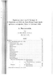 3. Macrostomida. - Macrostomorpha