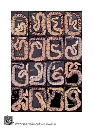 Ecdysis cycle of a giant snake (Boa constrictor) Part 5 ... - verveen.eu