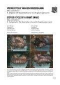 Ecdysis cycle of a giant snake (Boa constrictor) Part 5 ... - verveen.eu - Page 2