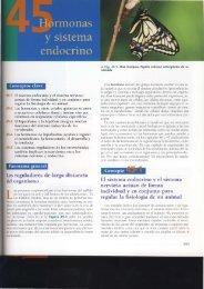 reguladores de larga distancia I organismo El sistema endocrino y ...