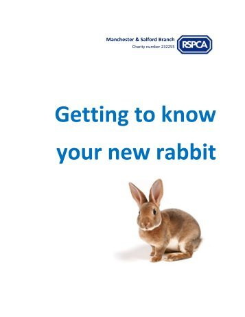 Getting to know your new rabbit - RSPCA Manchester and Salford