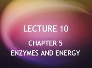 Energy and Enzymes - Biology Courses Server