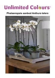 Phalaenopsis aanbod Anthura telers
