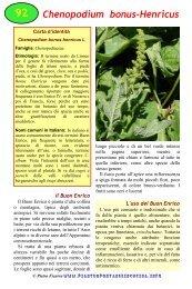 Chenopodium bonus-Henricus - Piante spontanee in cucina