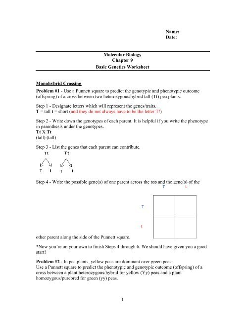 ch 9 punnet square worksheet