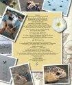 Un diario para mi hija La tortuga de verano - Sylvan Dell Publishing - Page 4