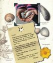 Un diario para mi hija La tortuga de verano - Sylvan Dell Publishing - Page 5