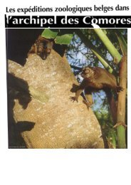 Untitled - Comores-online