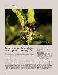La desaparición de las abejas, un riesgo para otras especies