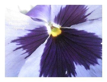 "Advanced Photography ""Spring"" - Holmdel"