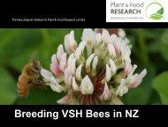 Breeding VSH Bees in New Zealand