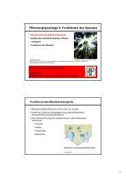 download pdf Pflanzenphysiologie 2: Funktionen des ... - ZMBH