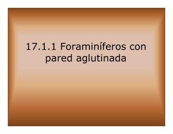 17.1.1 Foraminíferos con pared aglutinada - Aragosaurus