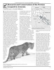 Research and conservation of the Persian leopard in Armenia